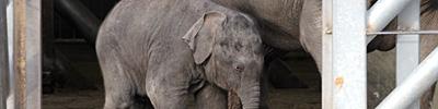 olifantenjong