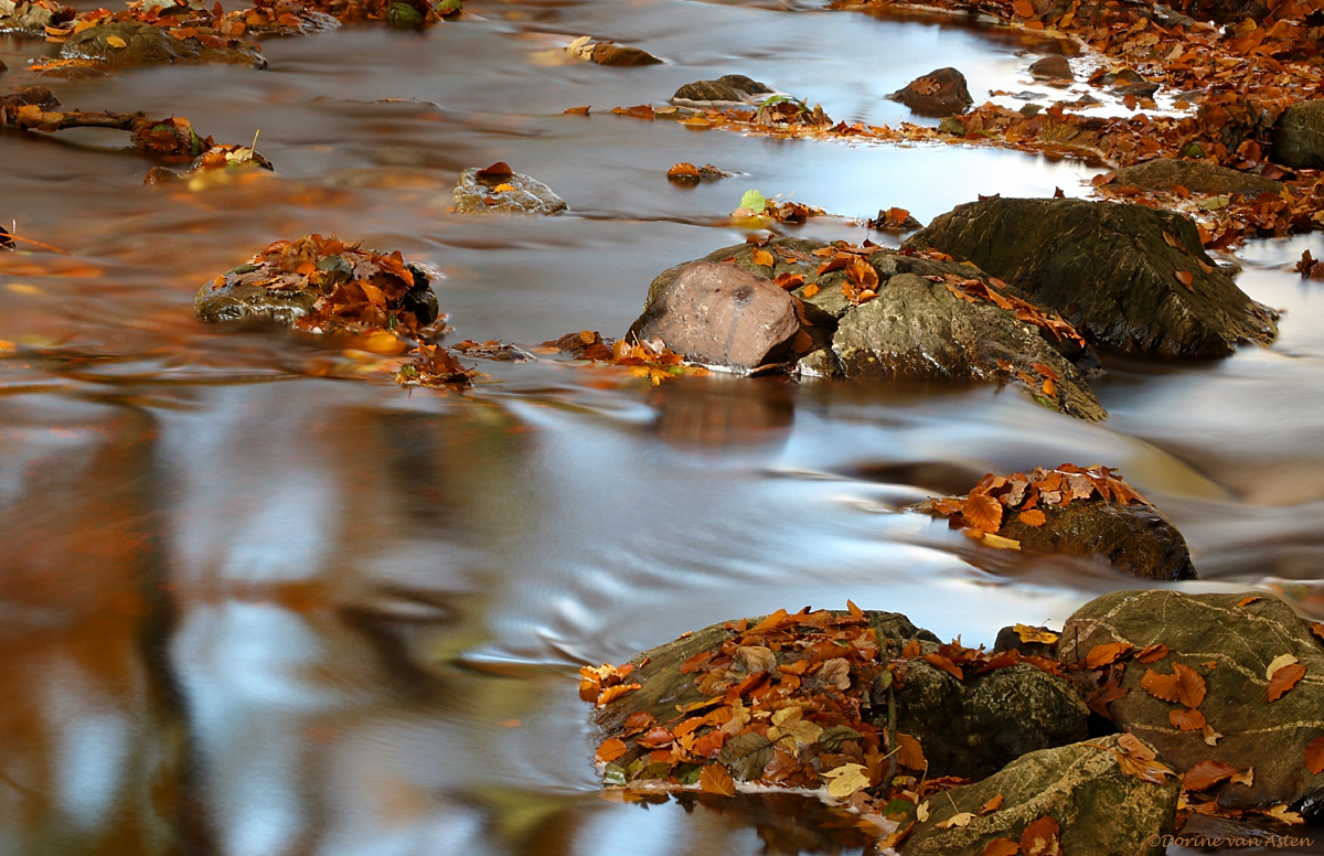 water, stenen en herfstbladeren