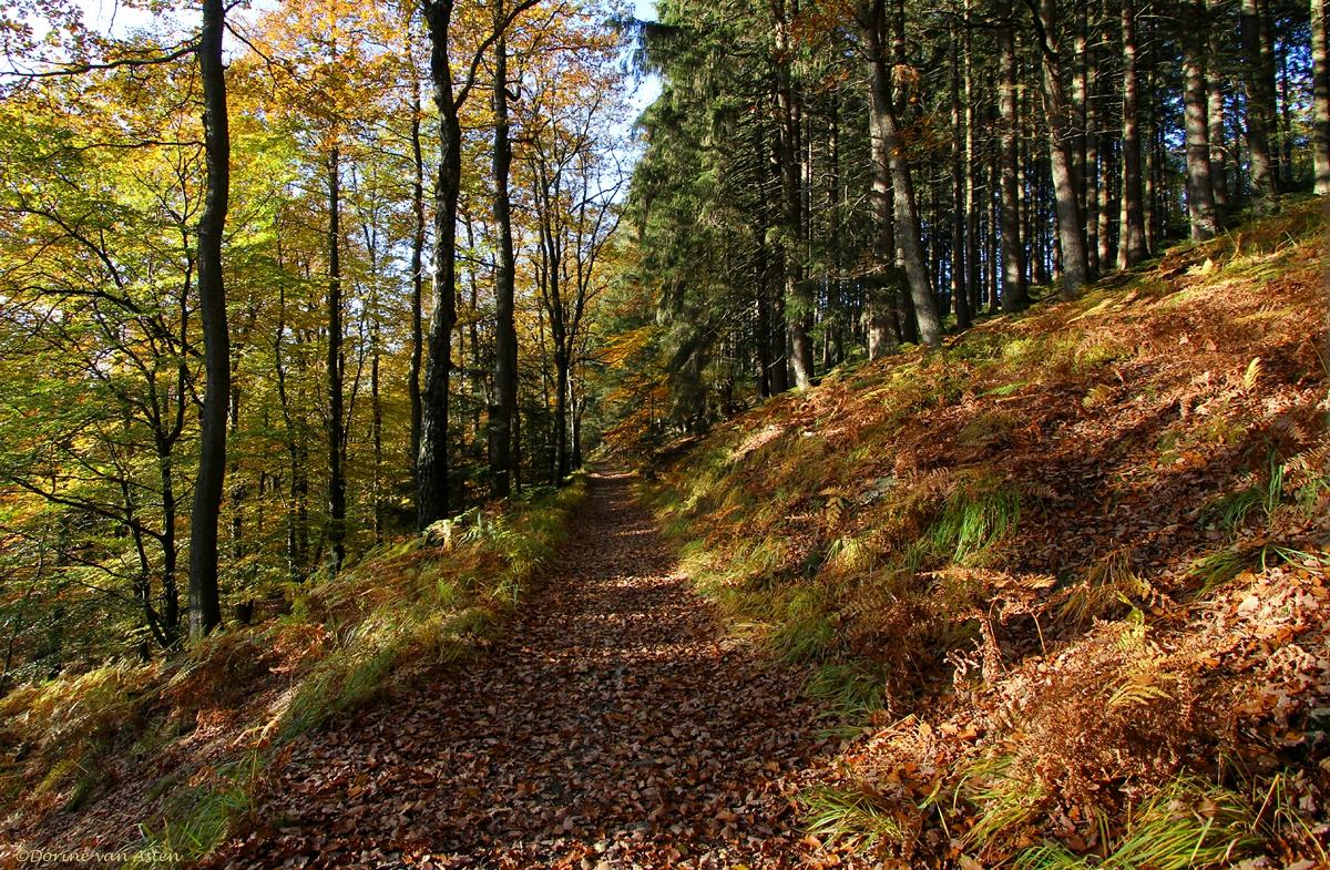 het bospad